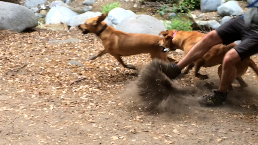 http://www.stanyakahn.com/files/gimgs/th-11_dogs_knockoverguy.jpg